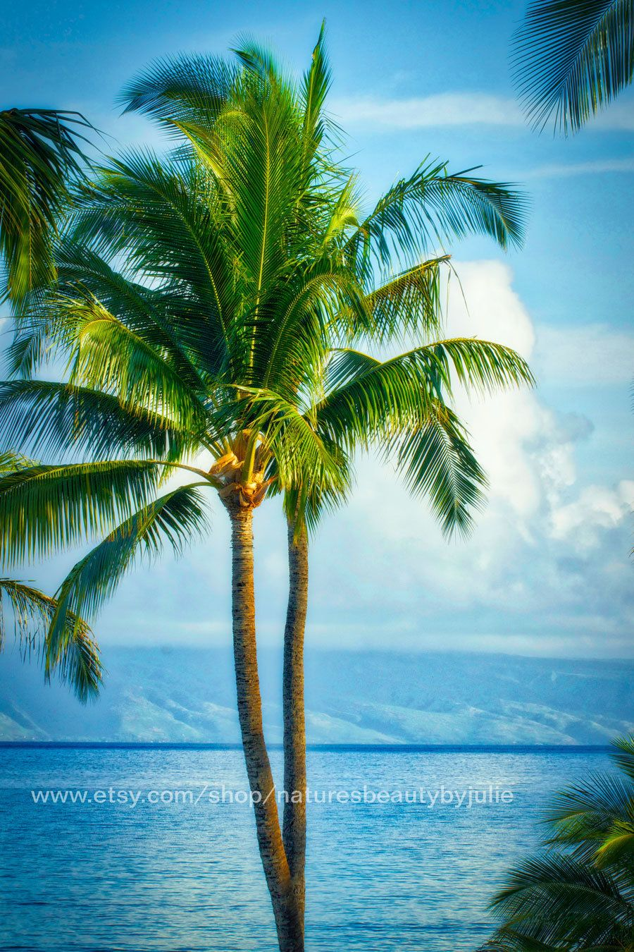 Palm Tree Photography Print Palm Tree Wall Art Beach Scene Ocean Art Landscape Photography Palm Tree Wall Art Palm Tree Photography Landscape Photography