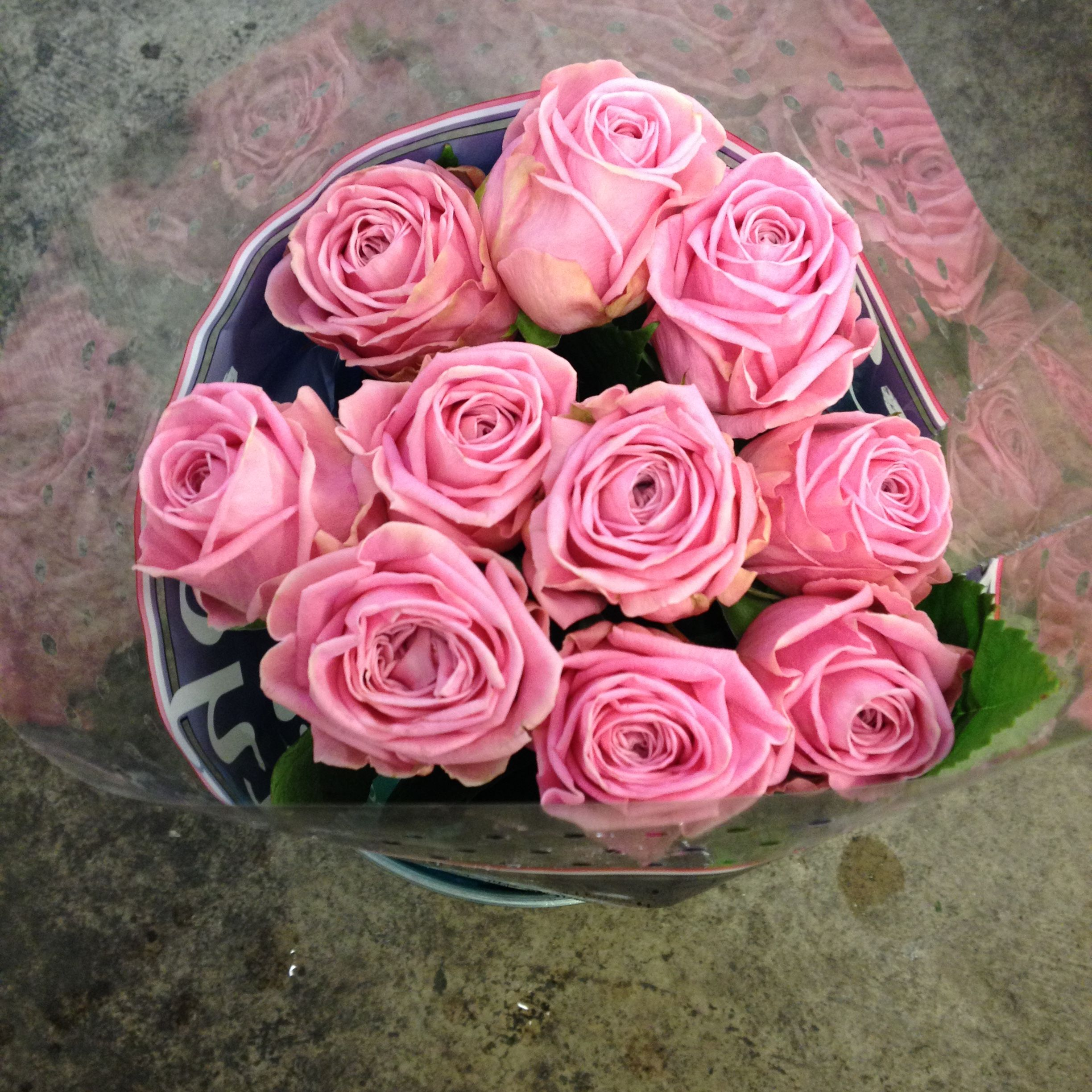 pretty pink rose called u0027heidi u0027 sold in bunches of 10 stems from