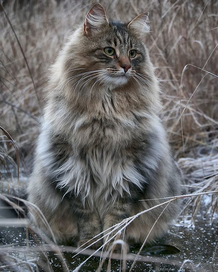 30 Pics Of Finnish Cats Living Their Best Winter Life