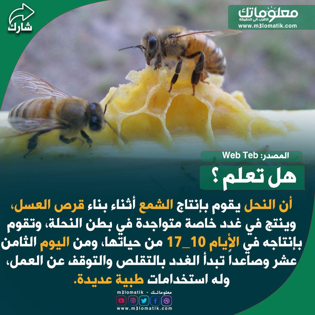 النحل وإنتاج العسل