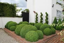 cloud topiary - Google Search