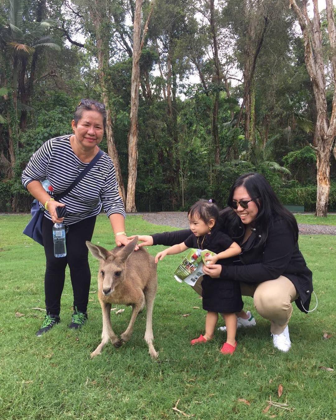 #kangaroo #joey #outbackjack #goldcoast #wildlife #currumbin #currumbinwildlifesanctuary #australia by twirang http://ift.tt/1X9mXhV