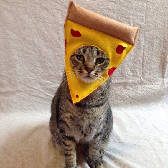 29846bf2740 Pepperoni Pizza Costume for Cats | Cat Love | Cat costumes, Pizza ...
