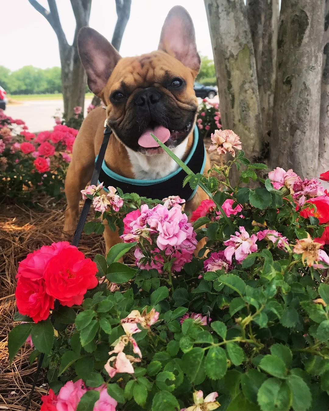 Traveling and road trips with pets a dog friendly pit