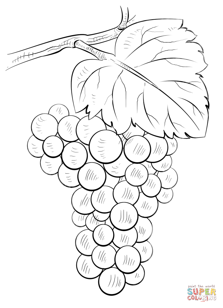 Brunch Of Grapes Flower Drawing Tutorials Grape Drawing Fruits Drawing