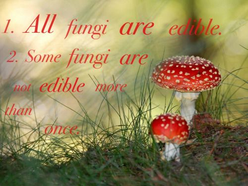 Pictures of all fungi mushrooms