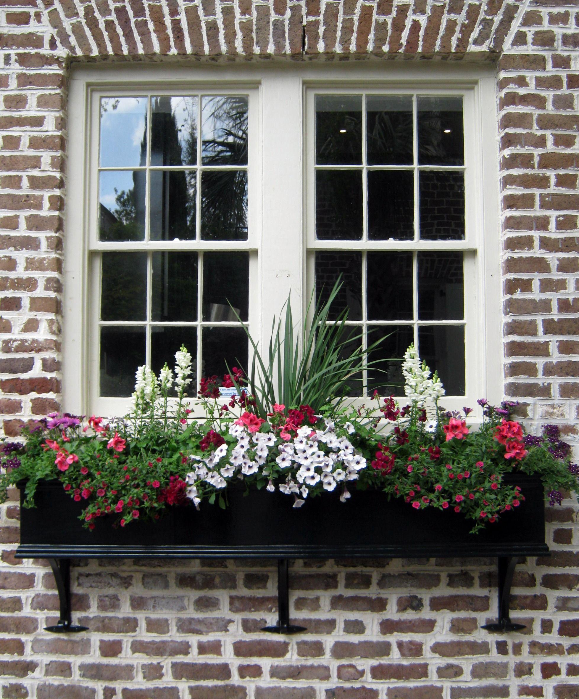 Charleston S Wonderful Window Boxes Window Box Flowers Window Box Plants Window Boxes