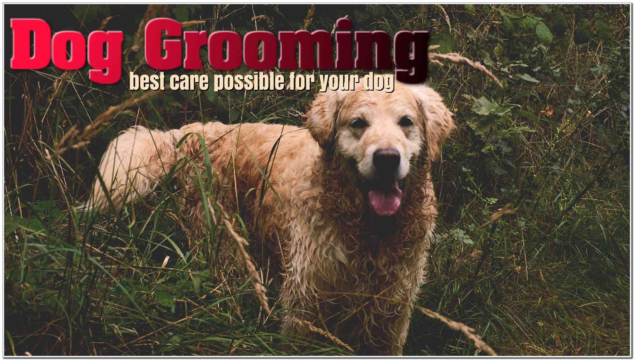 Use These Dog Grooming Ideas For A Bouncing Happy Dog Dog