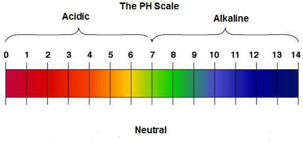 Alkalna i kisela hrana (pH vrednosti namirnica) School tips - school physical form