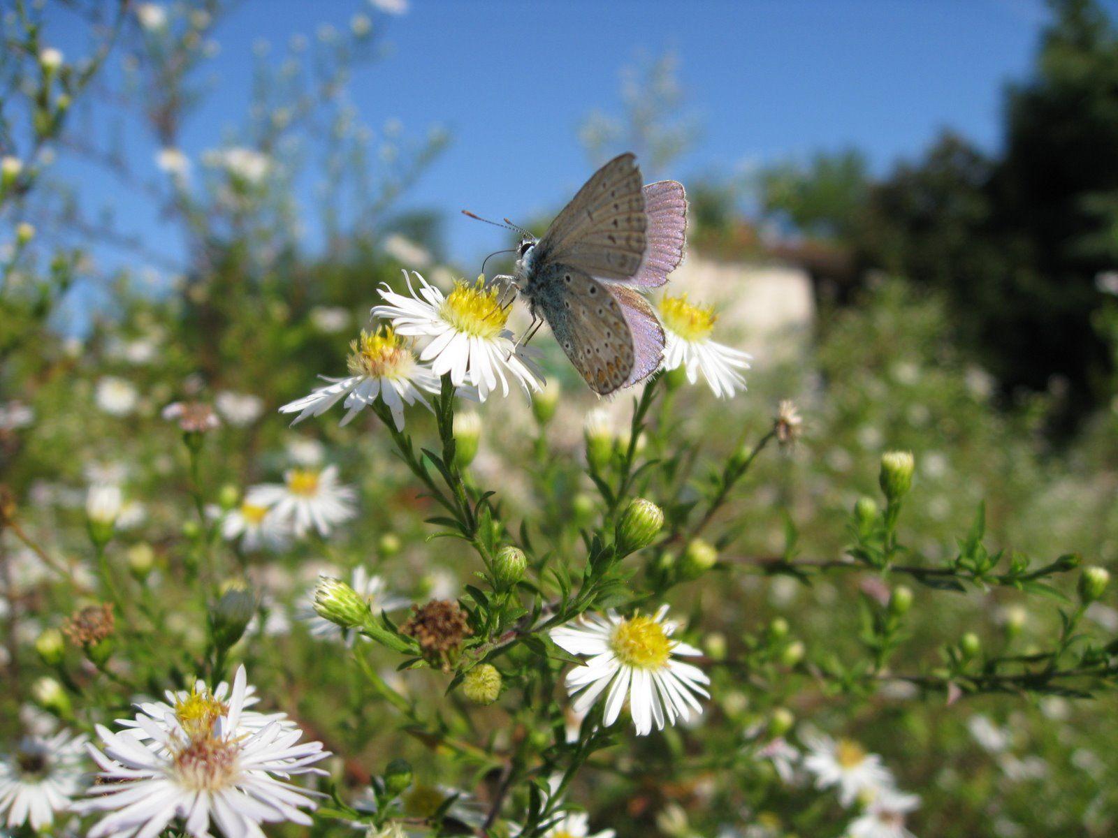 Butterfly Shangri La
