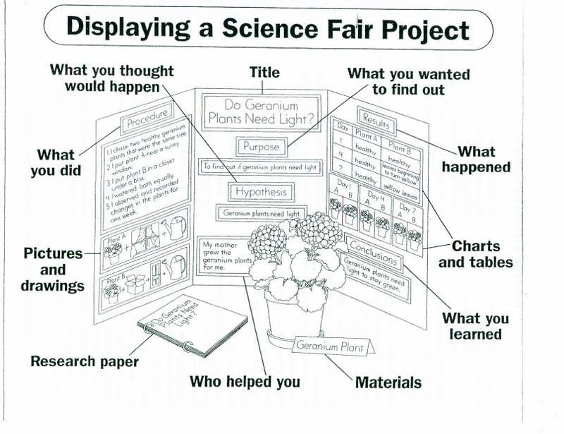 science board layout