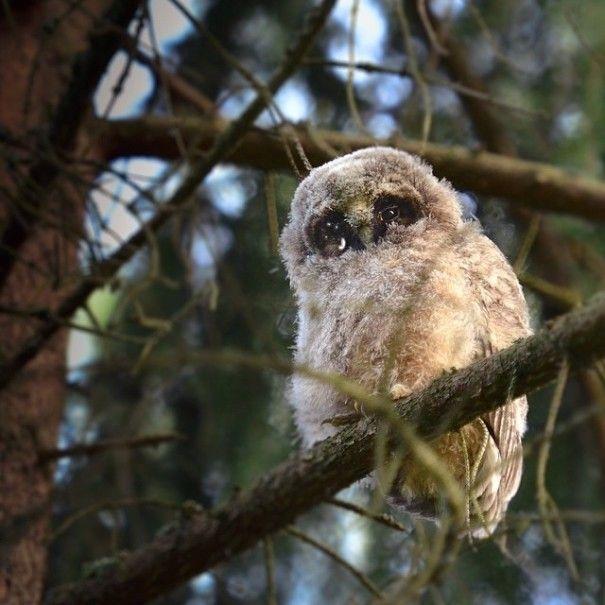 lovely owla in tree
