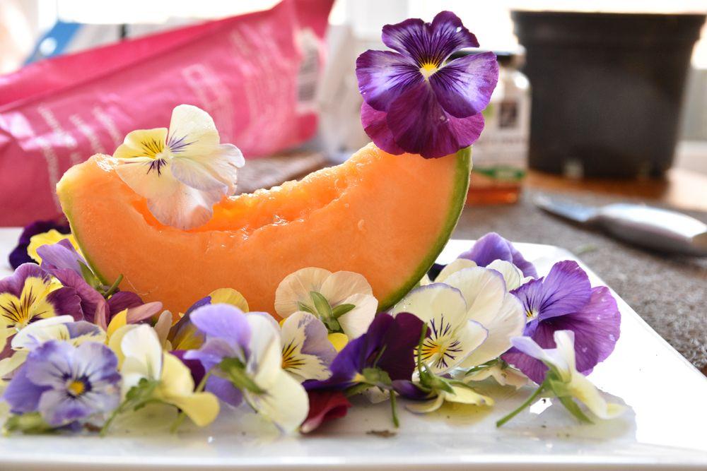 Fleurs comestibles - Jardin Express (avec images) | Fleurs comestibles, Fleurs, Jardin express