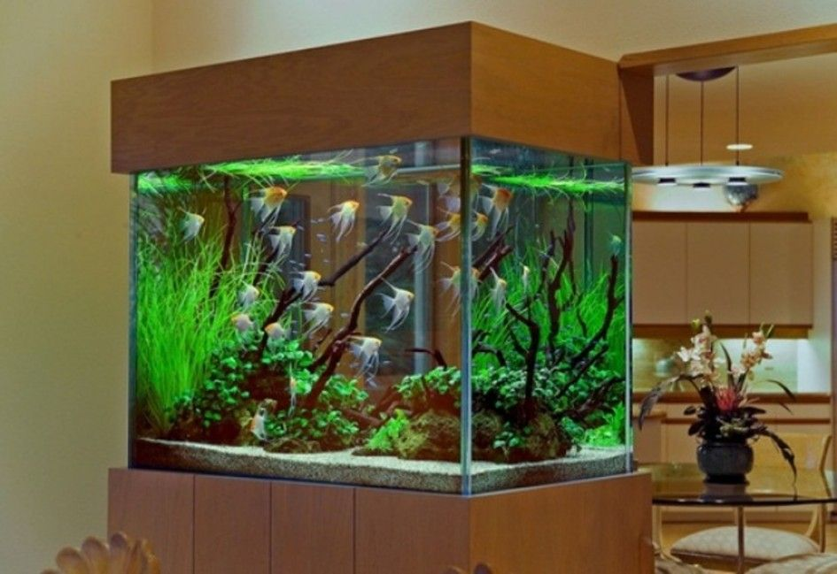 Home decoration, Fish Aquarium As Home Partition: aquarium design ...