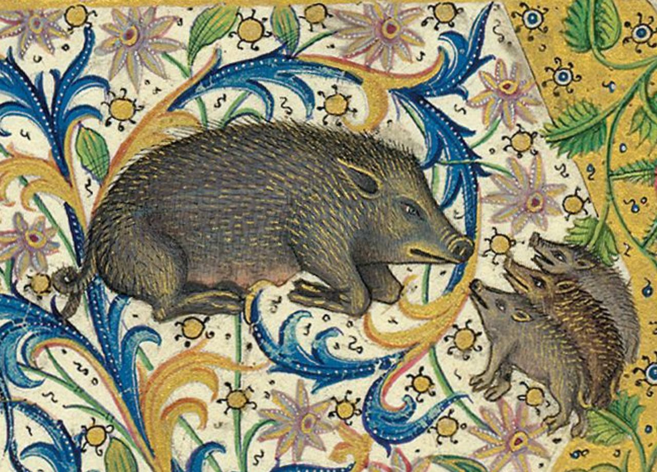 Gaston Phoebus. Three Little Boars. From: Le Livre de la chasse, Paris, c. 1407. NY, Morgan, MS M. 1044, fol. 1v.