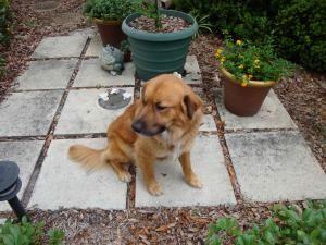 Adopt Rocky On Dogs Animal Rescue Retriever Mix