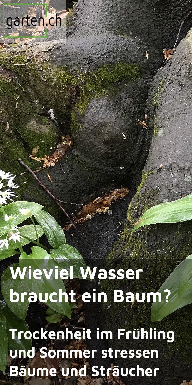 Wieviel Wasser Braucht Ein Baum In 2020 Baum Gartenbedarf Garten