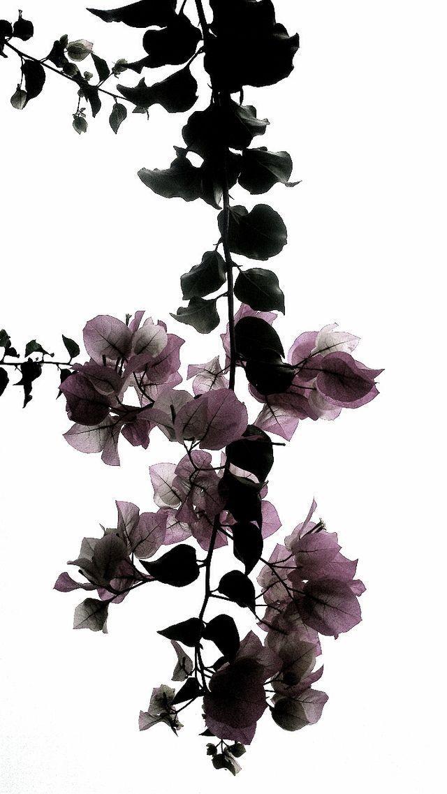 Pin von Earthworm Len auf Flowers Blumen hintergrund