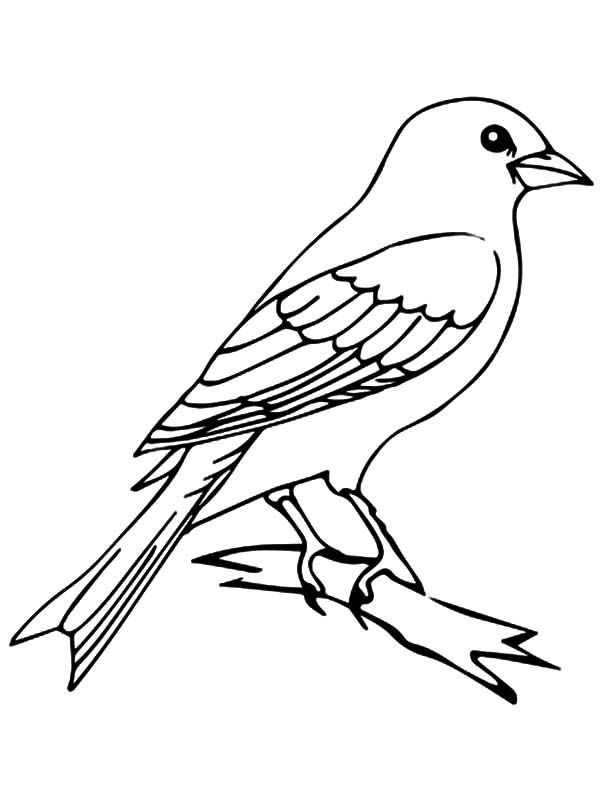 Mockingbird Mockingbird Outline Coloring Pages Mockingbird