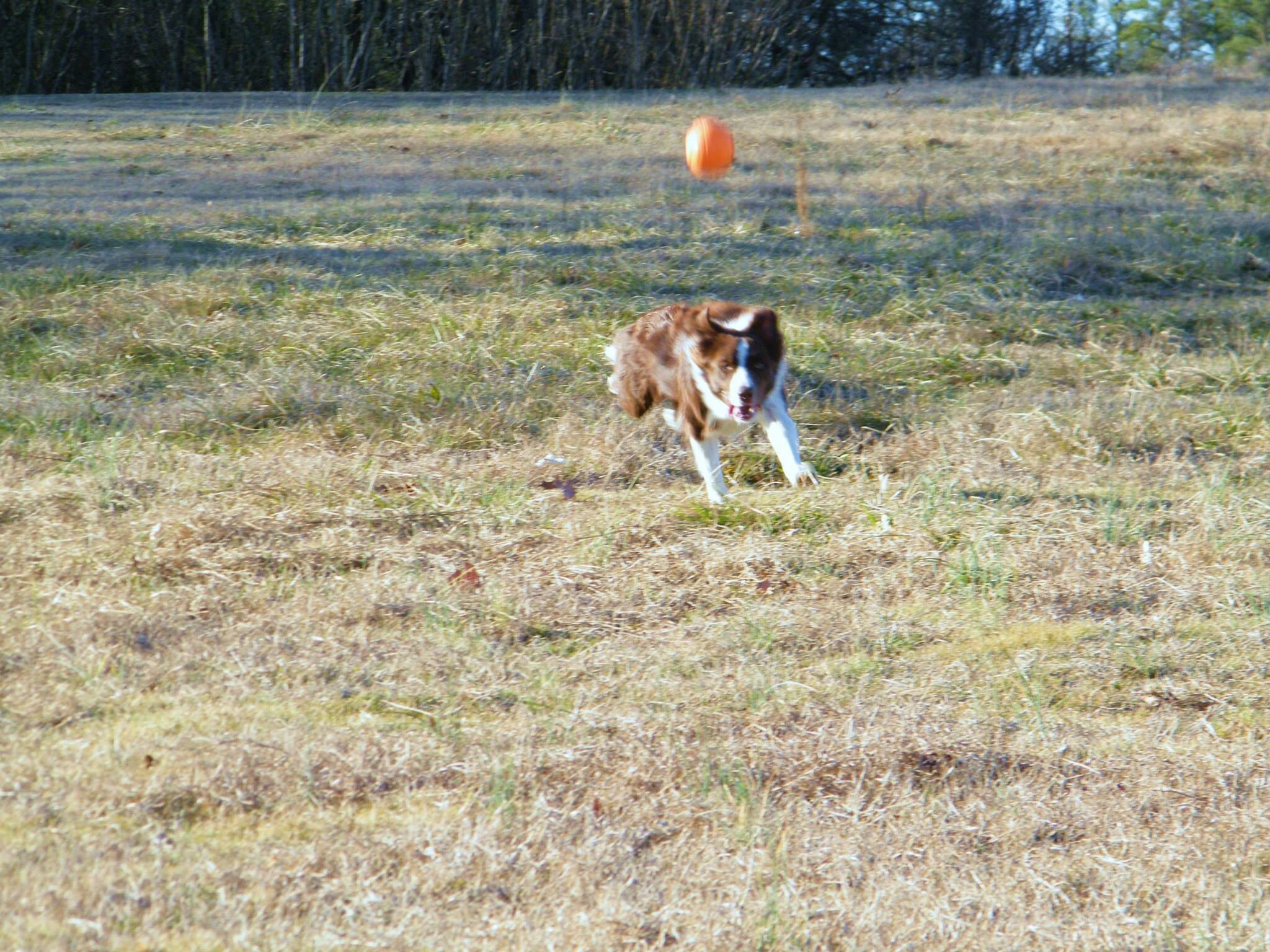 Piper about to catch the ball.