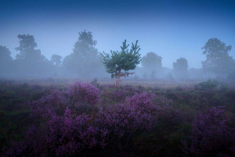 أجمل صور الطبيعة خلال فترات الصباح الضبابية في هولندا Outdoor Clouds