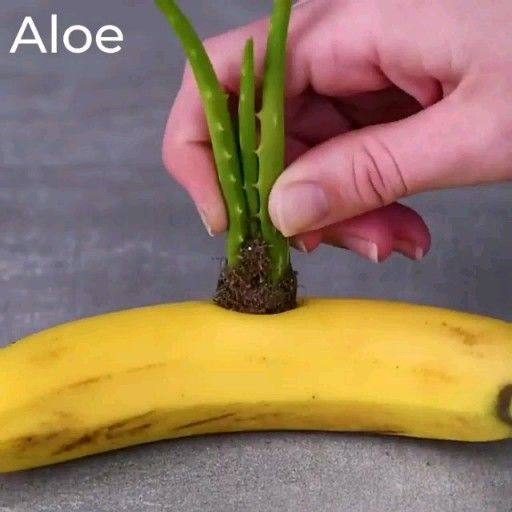 Photo of Most Clever Plant Hacks Ever