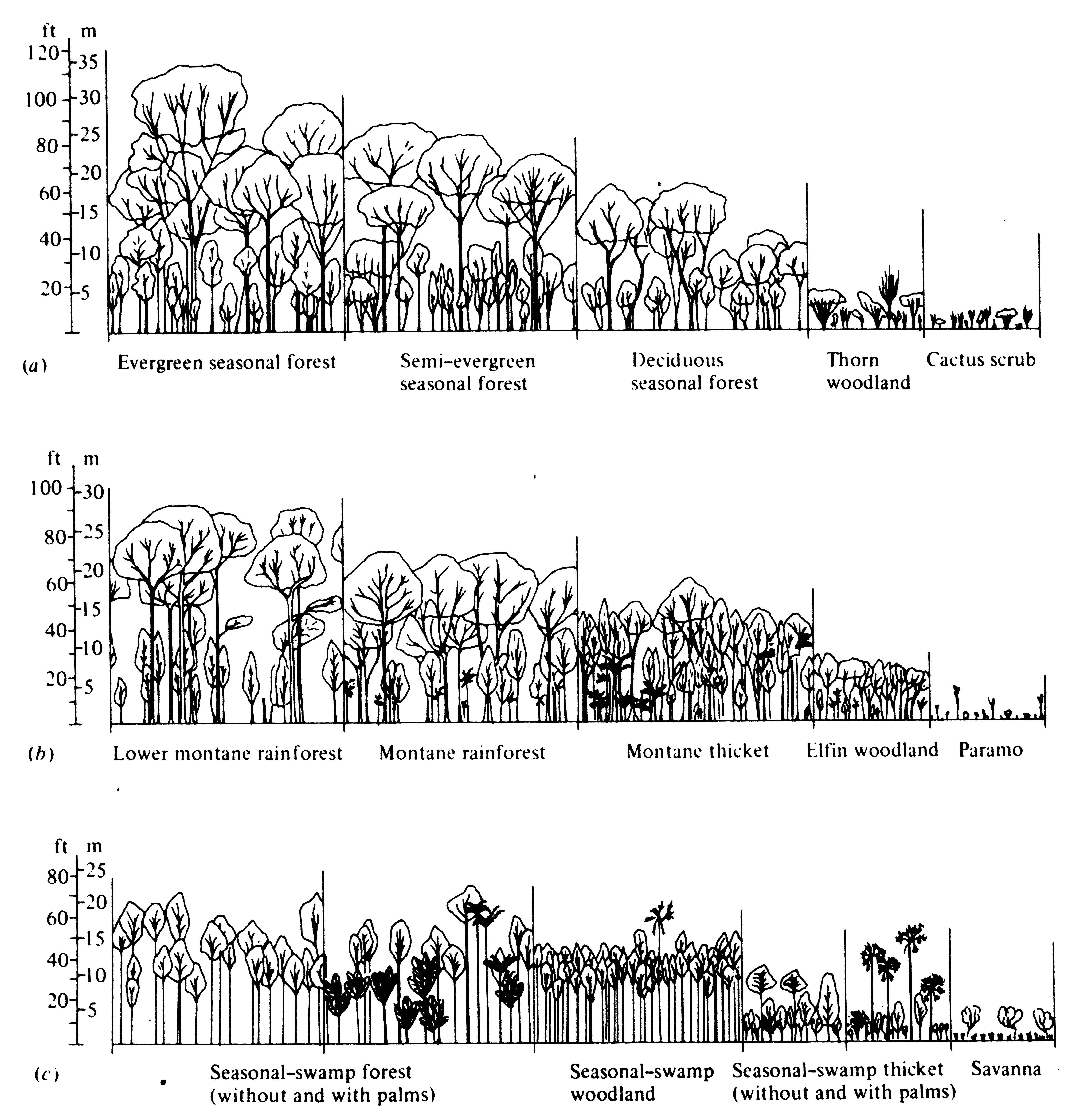 Us Vegetation Section