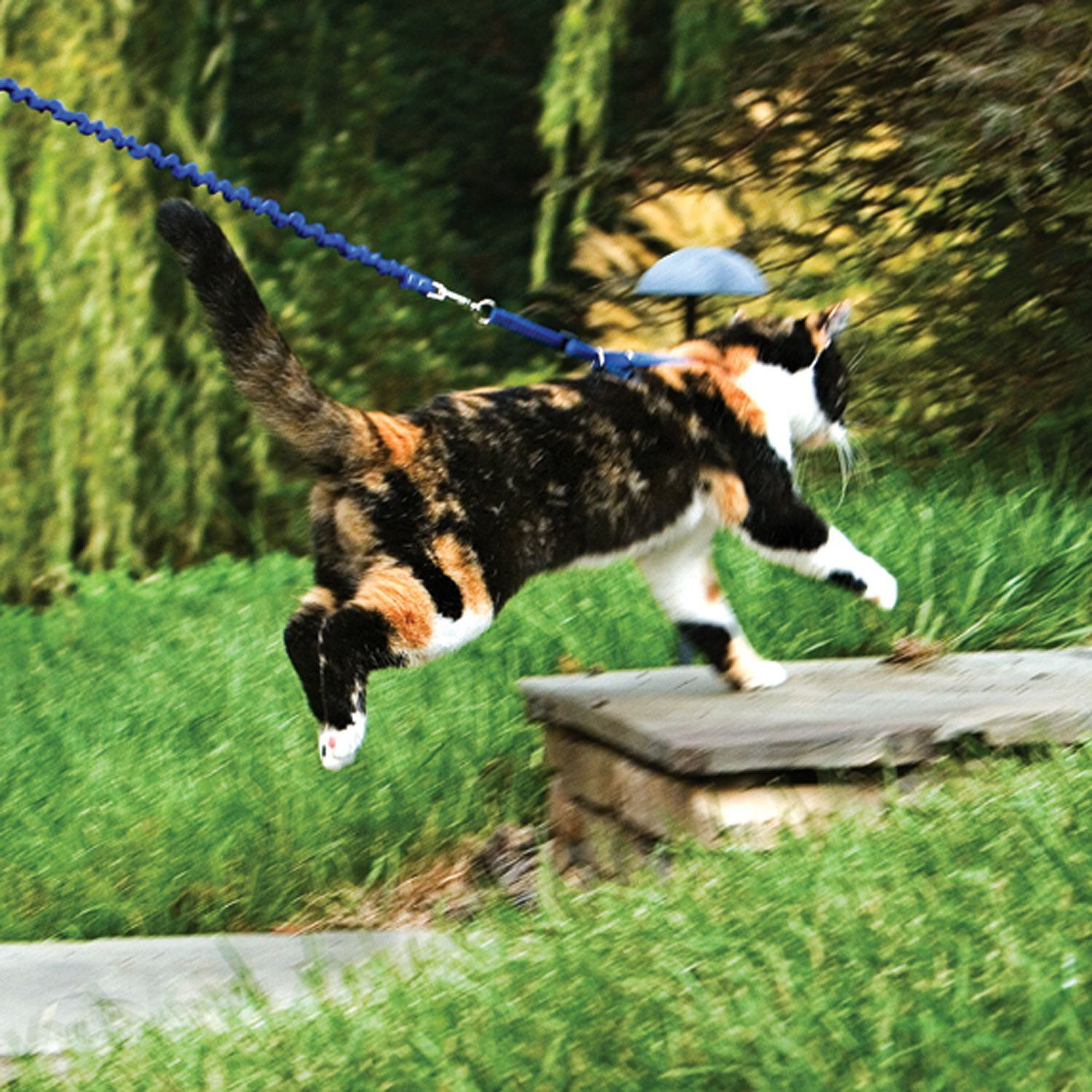 Petsafe Gentle Leader Come With Me Kitty Harness Bungee Leash Cat Leash Gentle Leader