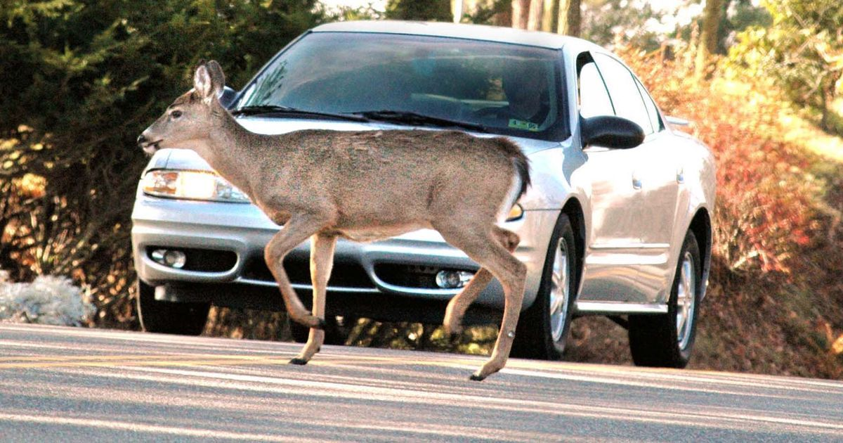 What to do if youre about to hit a deer with your car
