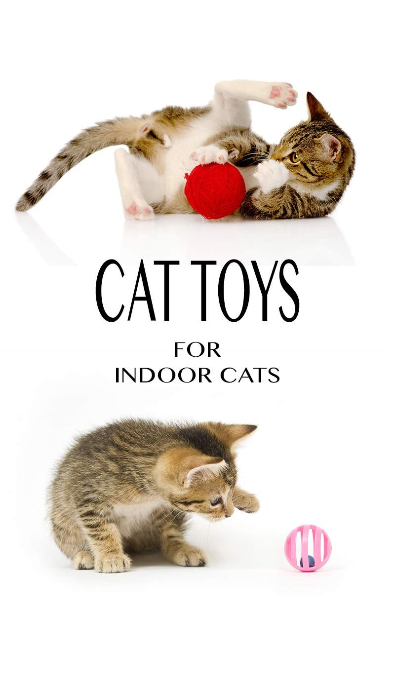 Guide To Cat Toys For Indoor Cats By The Happy Cat Site Indoor Cat Cat Toys Cat Allergies