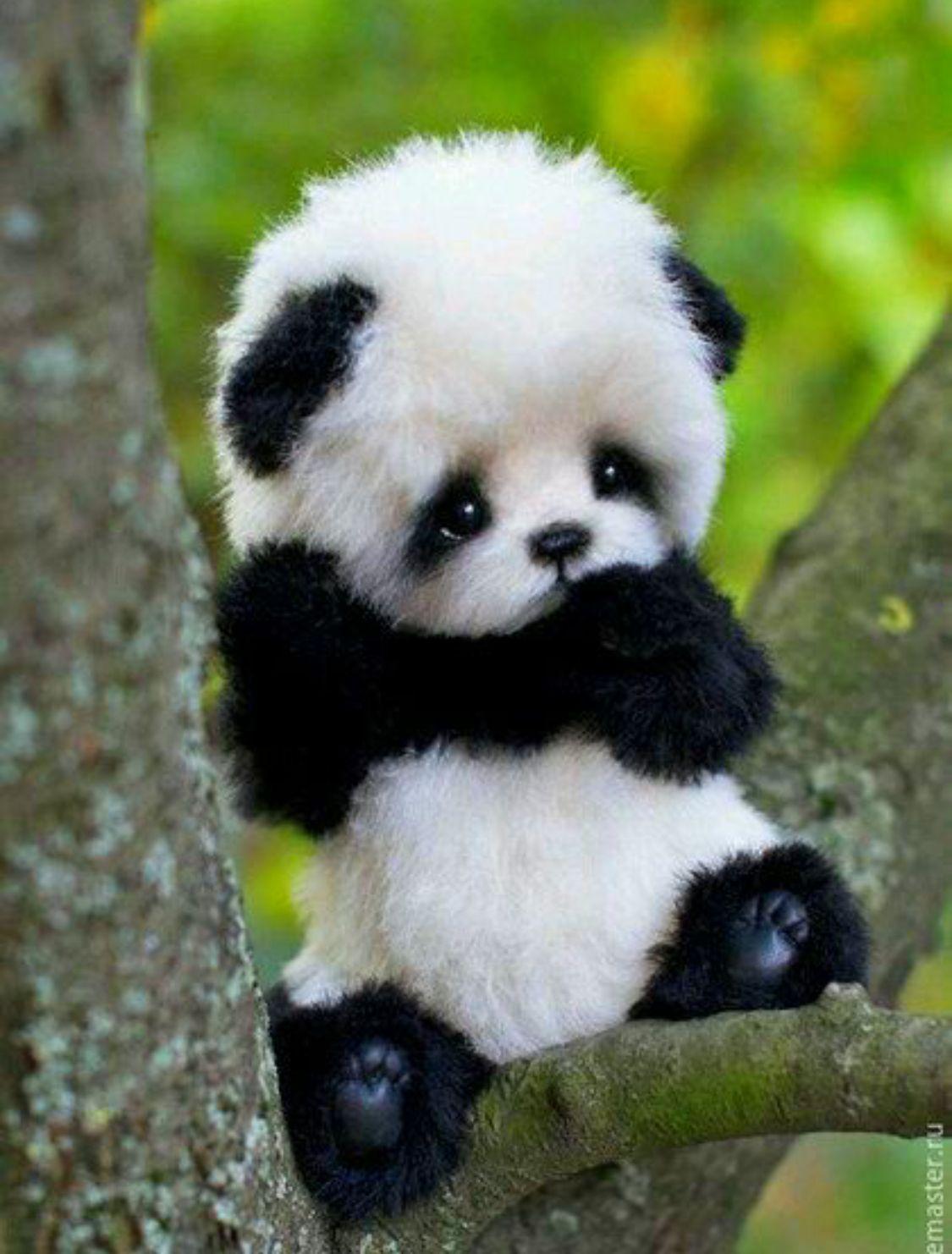 Pin By Tehreem Arshad On Cute Animals