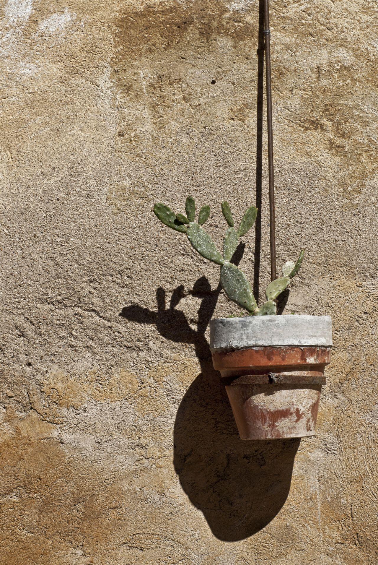 Cactus F11 1 160s Iso 100 Fl 50 Mm Juan Manuel Saenz De Santa  # Muebles Saenz De Santamar?a