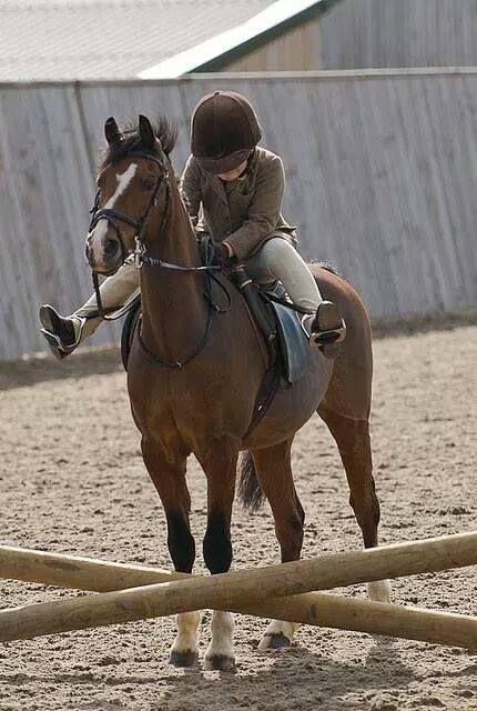 kick on equestrian horseshorse picturesbeautiful horses