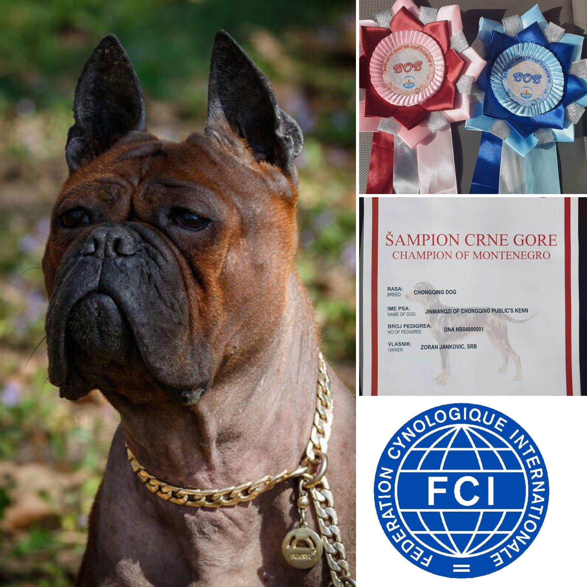 Mangzi Fci Champion Of Montenegro