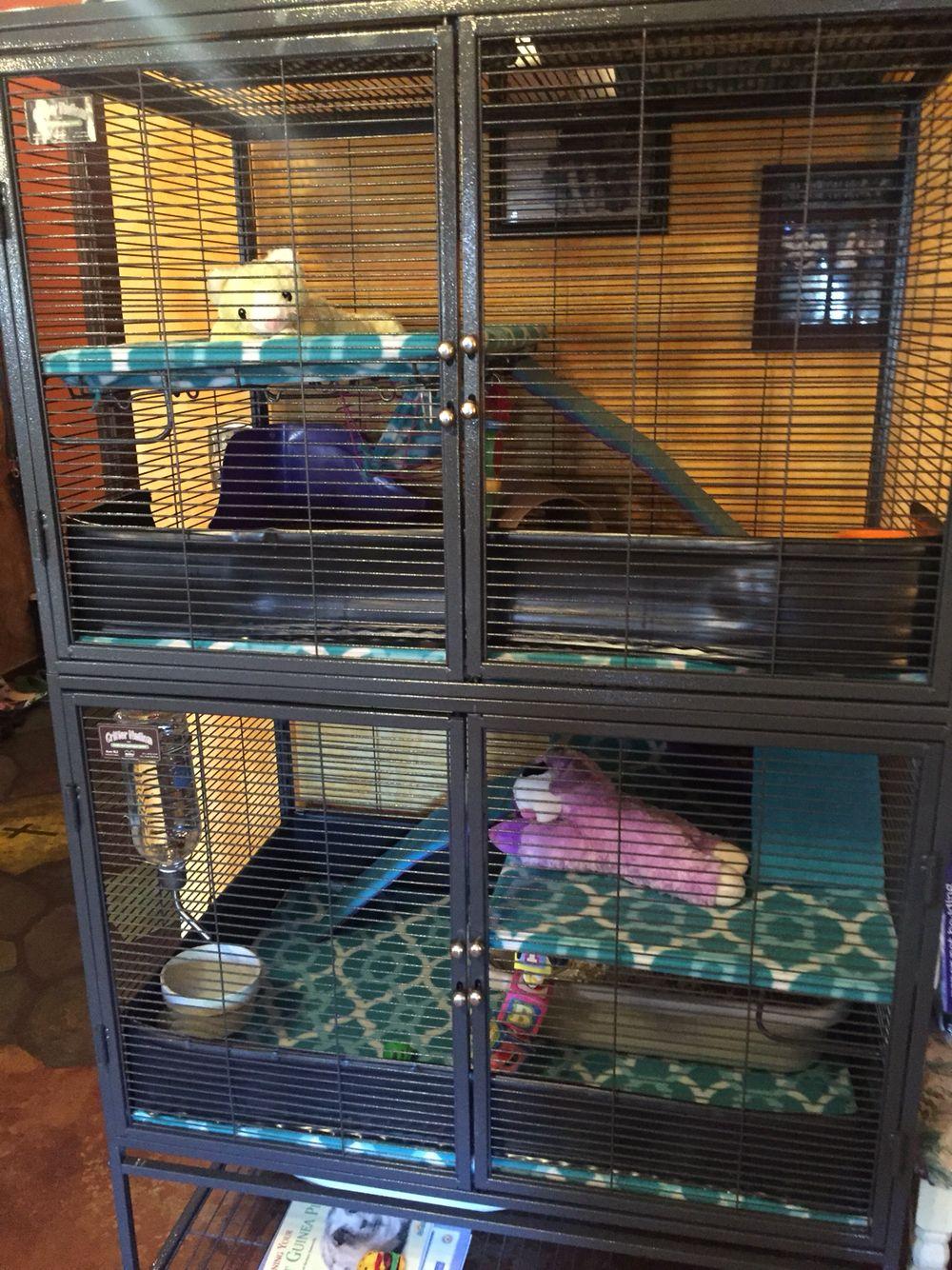 Pin On Pet Rats