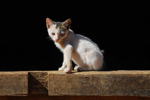 Small street cat #streetcat #photography #photographers on tumblr #travelphotography #animal #Myanmar #Burma