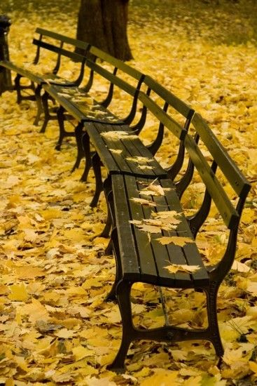 park benches, fallen leaves