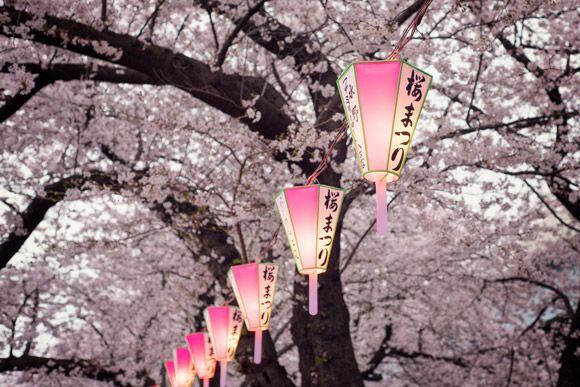 Japan 2020 Cherry Blossom Festival Updated Dates In 2020 Traveling By Yourself Japan Travel Cherry Blossom Festival