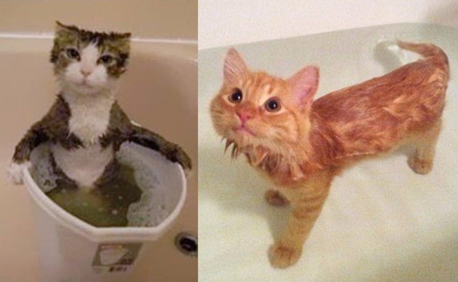 Tips For How To Bathe Your Cat Or Kitten With Images Cats Pet