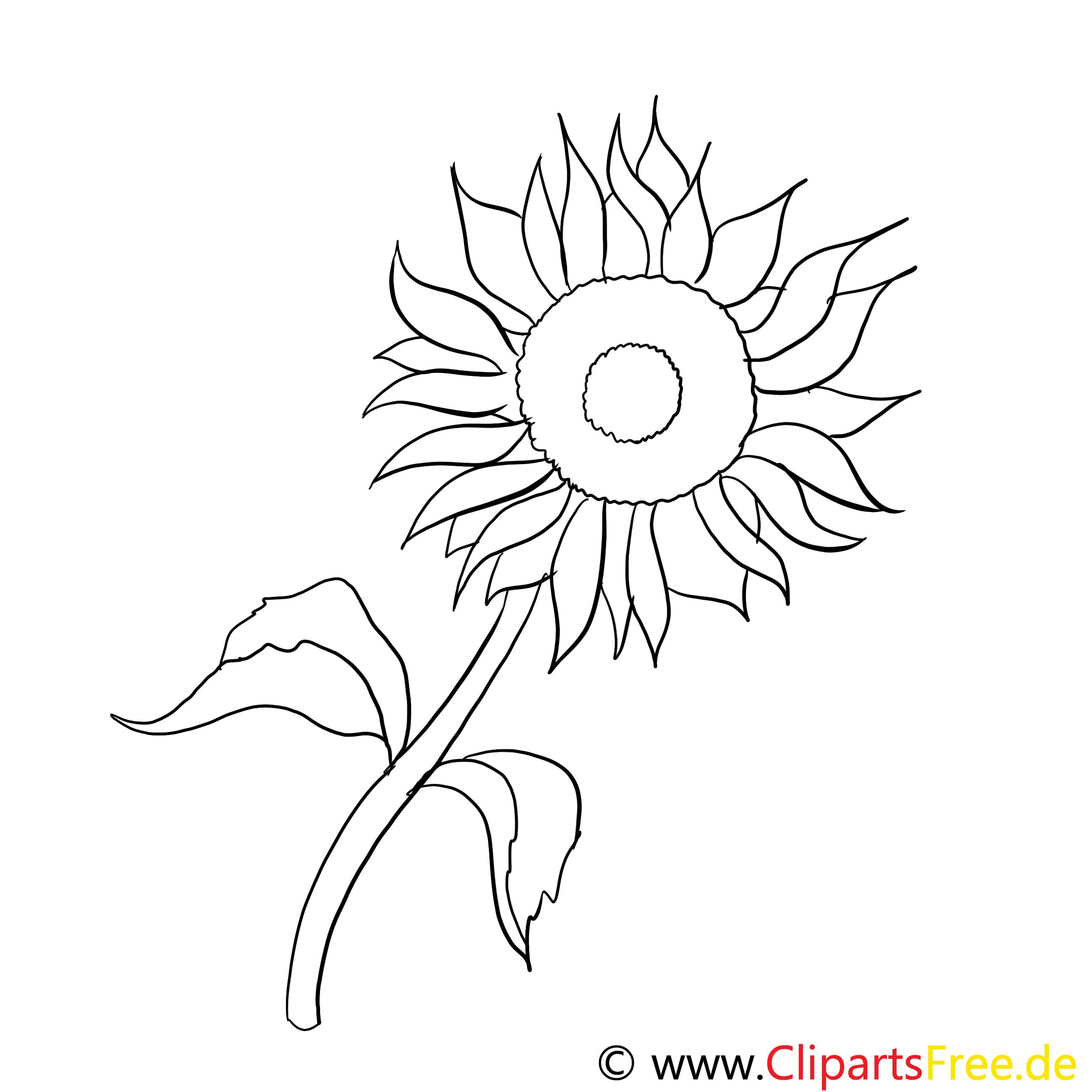 sonnenblume malvorlage kostenlos  kostenlose malvorlagen