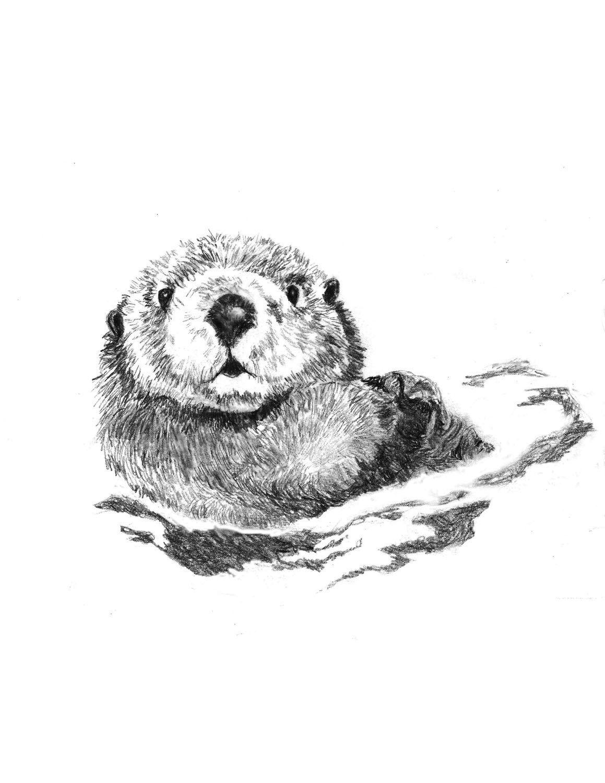 Otter Art - Little Swimmer - Otter Drawing   Nutrias, Lápiz y Dibujo