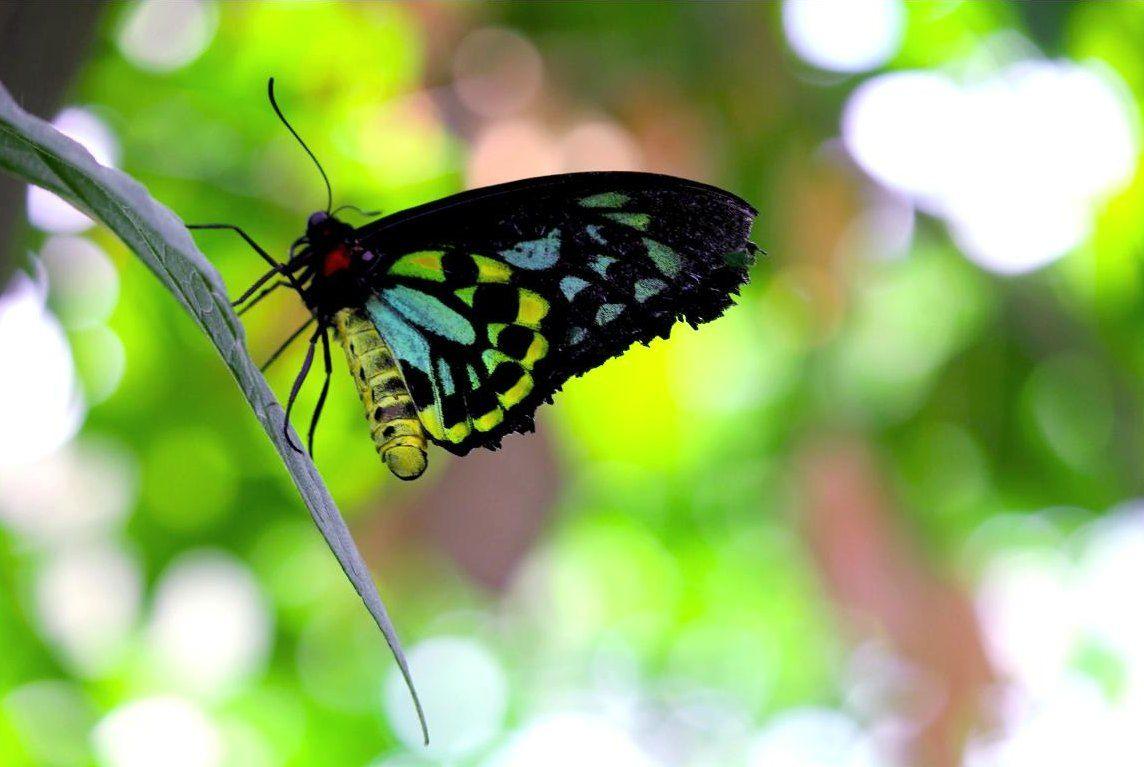 Gambar Kupu Kupu Cantik Bertengger Pesonadunia Insects Moth