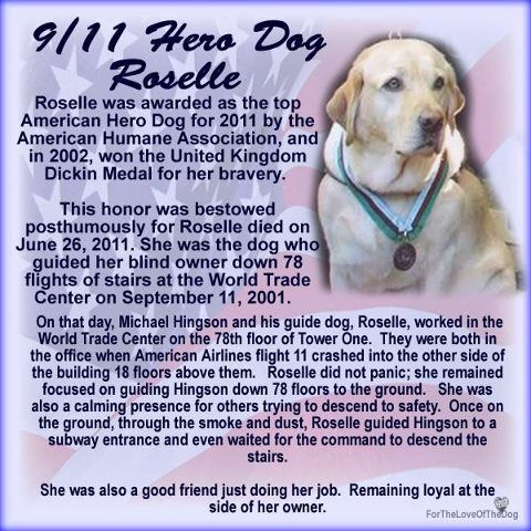 Roselle 9 11 Support Those Who Train Guide And Service Animals Dog Hero Dog 911 Dogs