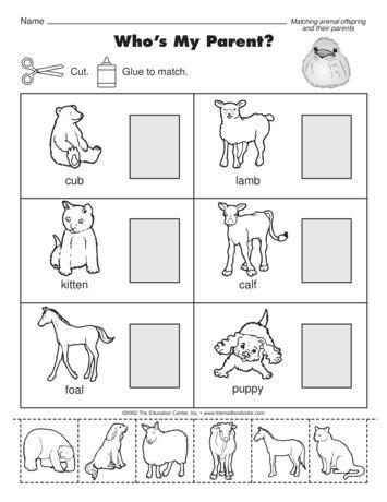 Animal Babies Worksheets Kindergarten