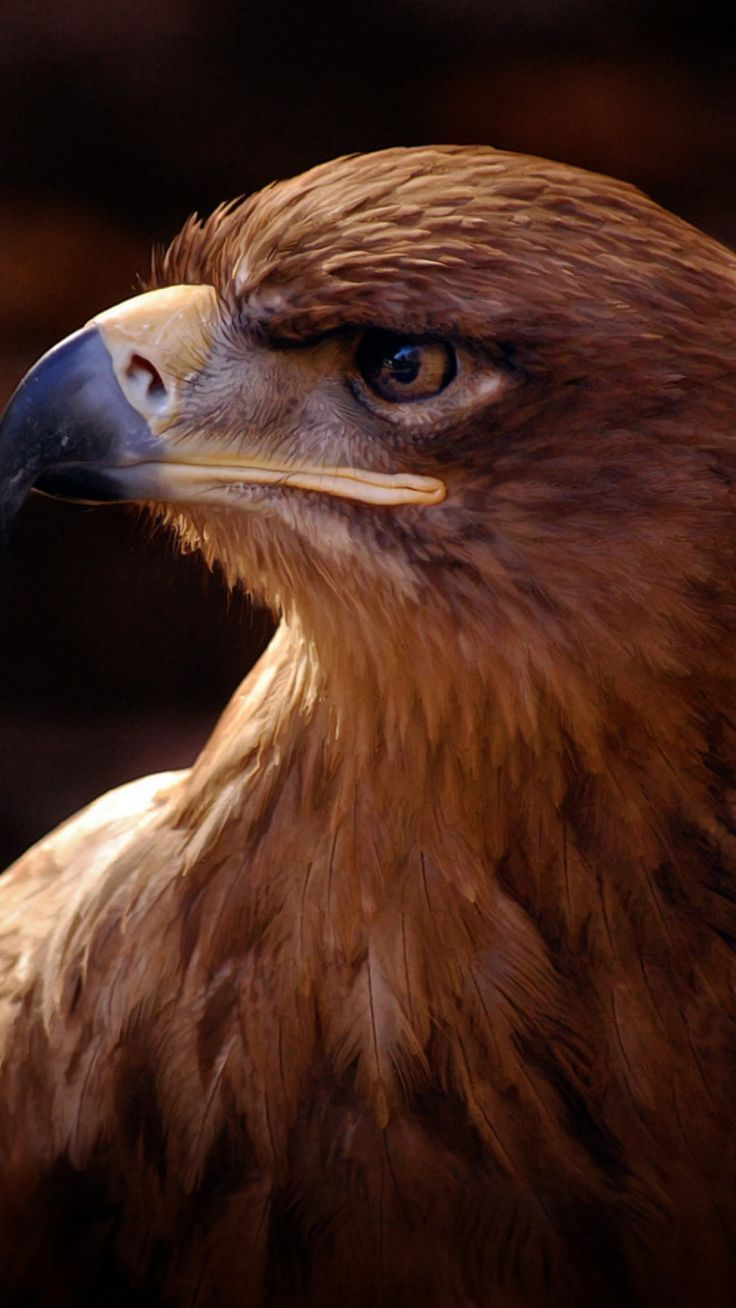Newest Pic Birds Of Prey Feathers Suggestions Birds Of Prey Are Found In A Wide Selection Of Habitats From Coasts To Mountain Birds Of Prey Animals Wild Birds