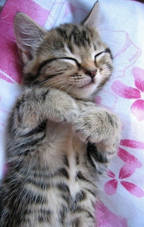 As Far As Cattime Is Concerned There Can Never Be Enough Cat Holidays We Celebrate Cats Every Day Here Are Some Gorgeous Kitti Baby Cats Animals Pretty Cats