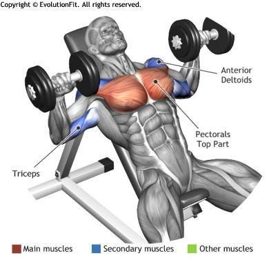 CHEST - DUMBBELL INCLINED BENCH PRESS | Lower abs ...