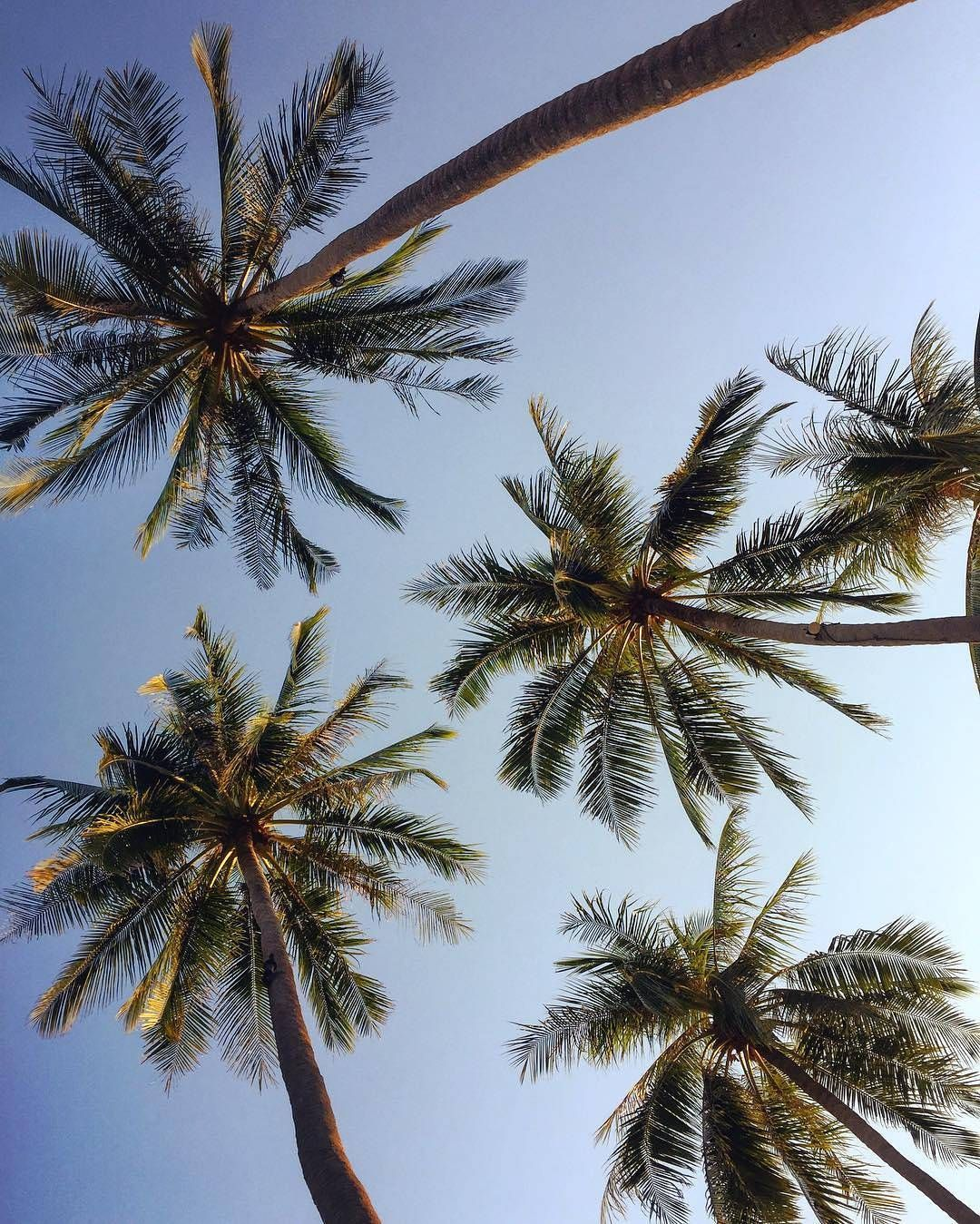 Palm Trees, Ocean Breeze And A Tropical Cocktail Please