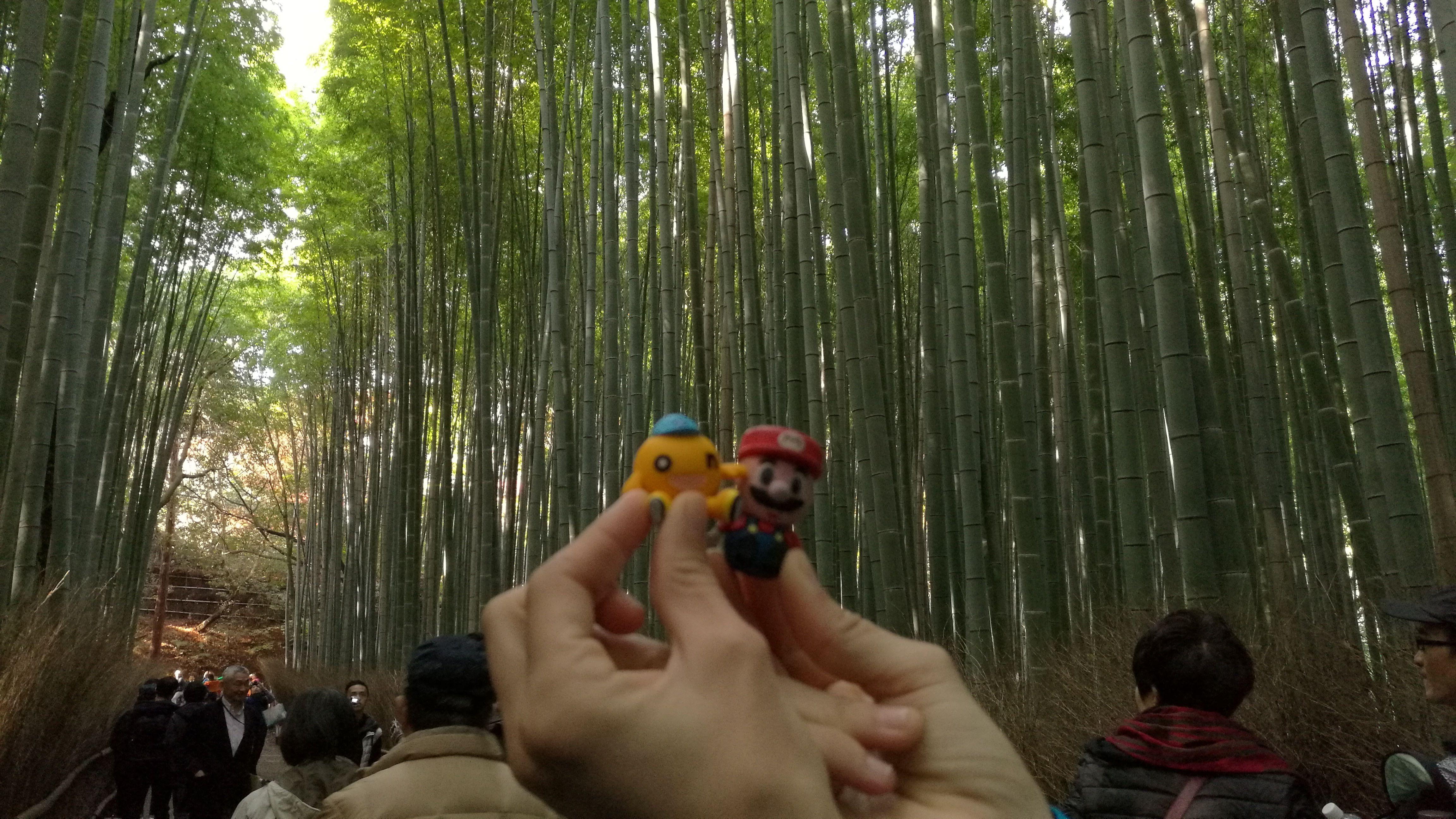 En el bosque de bambú de Arashiyama en Kioto, con un nuevo amigo