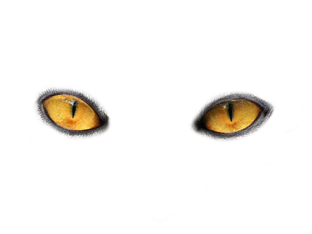 Cats Eyes By Moonglowlilly On Deviantart Light Background Images Light Blue Eyes Black And White Love
